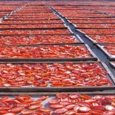 essicazione-pomodori2